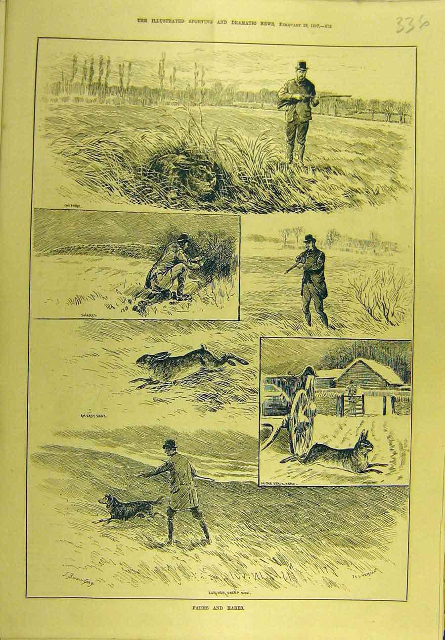 Print 1887 Rabbit Hares Farm Shooting Sport 368721 Old Original