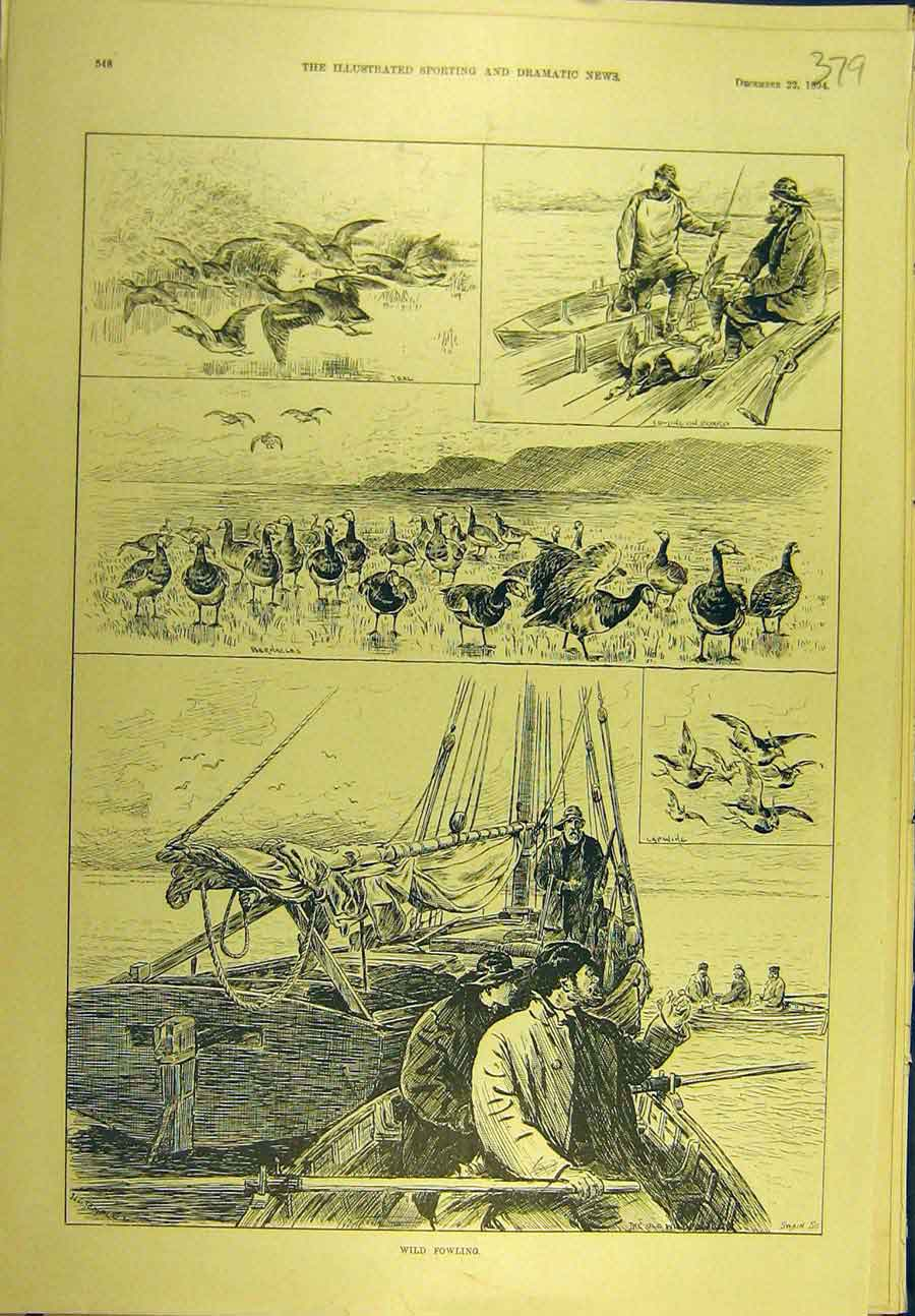 Print 1894 Wild-Fowling Bernacles Lapwing Teal Sport 798721 Old Original