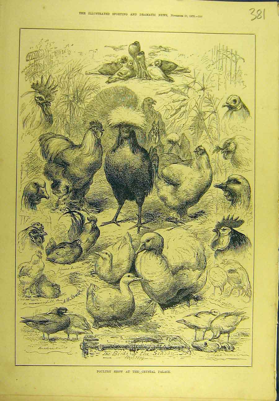 [Print 1879 Poultry Show Crystal Palace Birds 818721 Old Original]