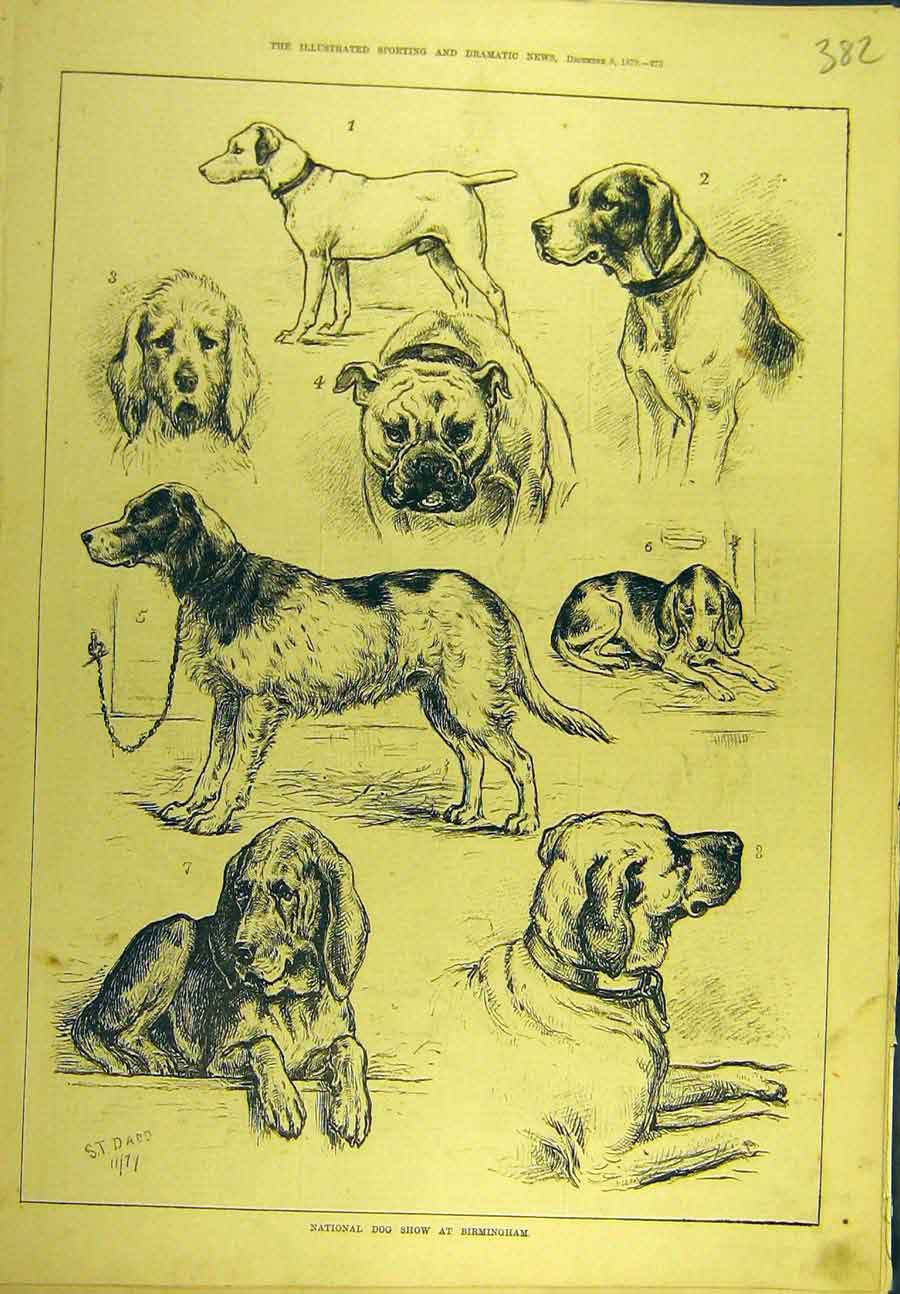 Print 1879 National Dog Show Birmingham Dadd Hound Terrier 828721 Old Original