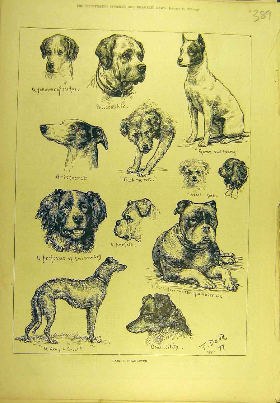 Print 1878 Canine Character Sketches Portrait Dogs Dadd 898721 Old Original
