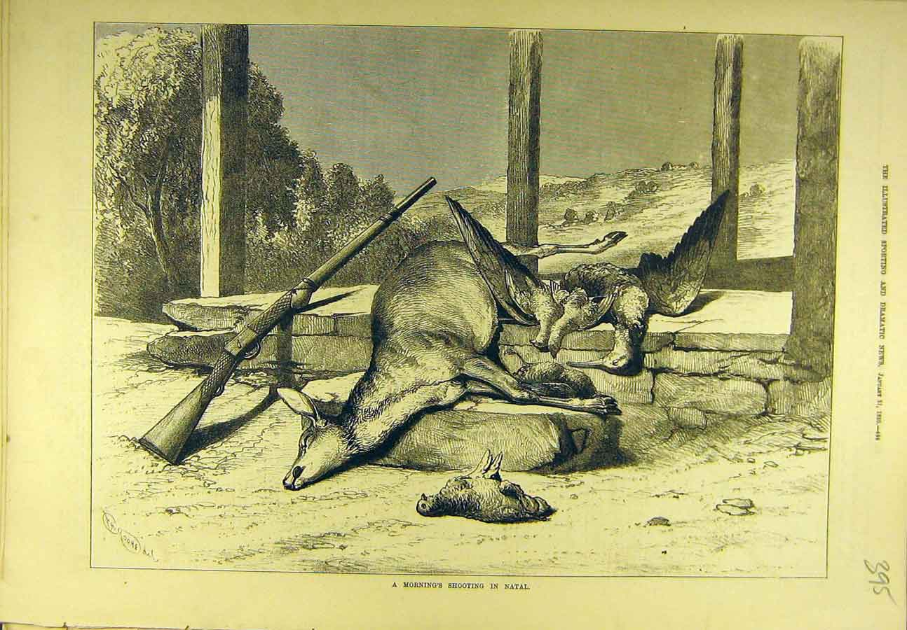 Print 1880 Shooting Natal South-Africa Game-Bird Buck 958721 Old Original