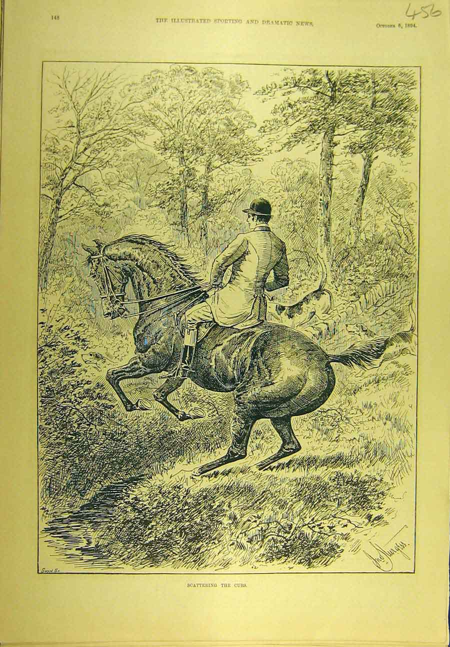 Print 1894 Scattering Cubs Hunting Hounds Horse Sport 568721 Old Original