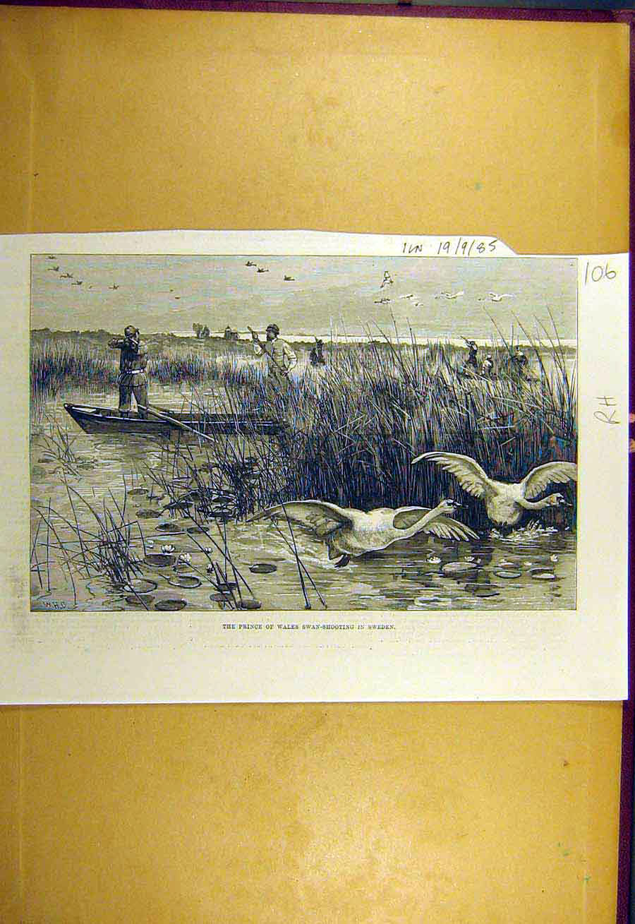 Print 1885 Prince Wales Swan-Shooting Sweden Bird 068731 Old Original