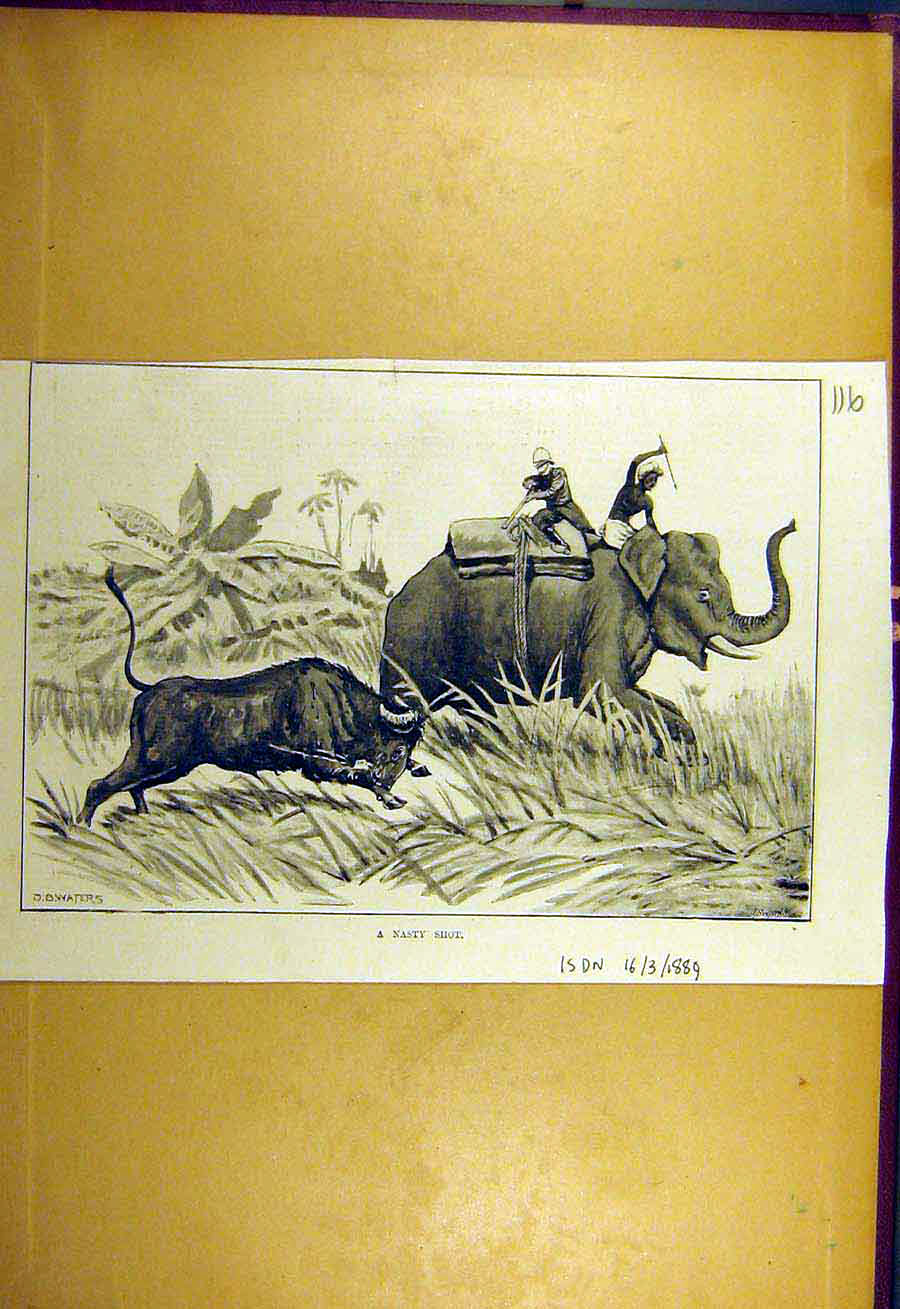 Print 1889 Nasty Shot Elephant Buffalo Animal Hunting Sport 168731 Old Original