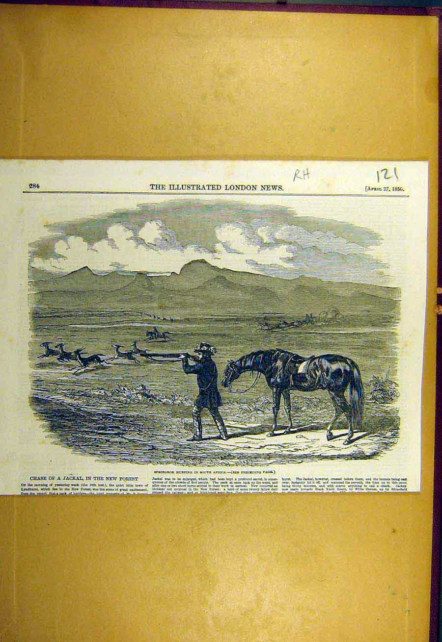 Print 1850 Springbok Hunting South-Africa Animal Sport 218731 Old Original