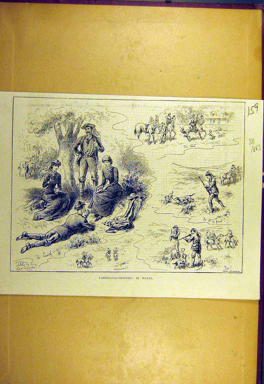 Print 1883 Partridge Shooting Natal South-Africa Sport 598731 Old Original