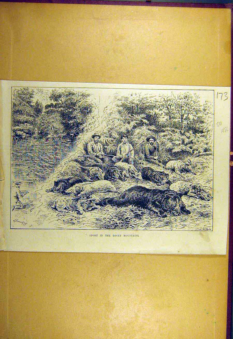 Print 1886 Sport Rocky Mountains Bear-Hunt Shooting 738731 Old Original