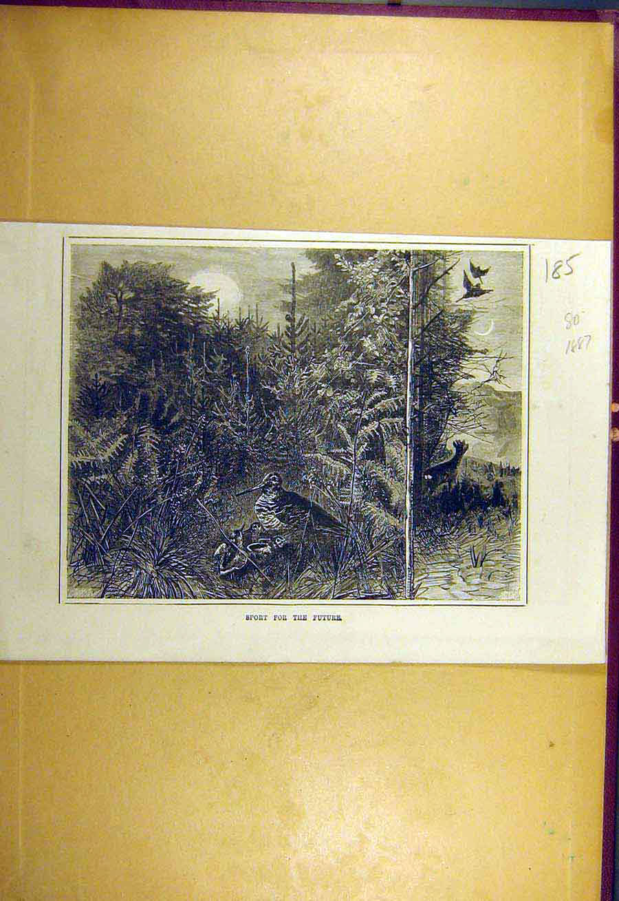 Print 1887 Sport Future Wild-Bird Animal Shooting 858731 Old Original