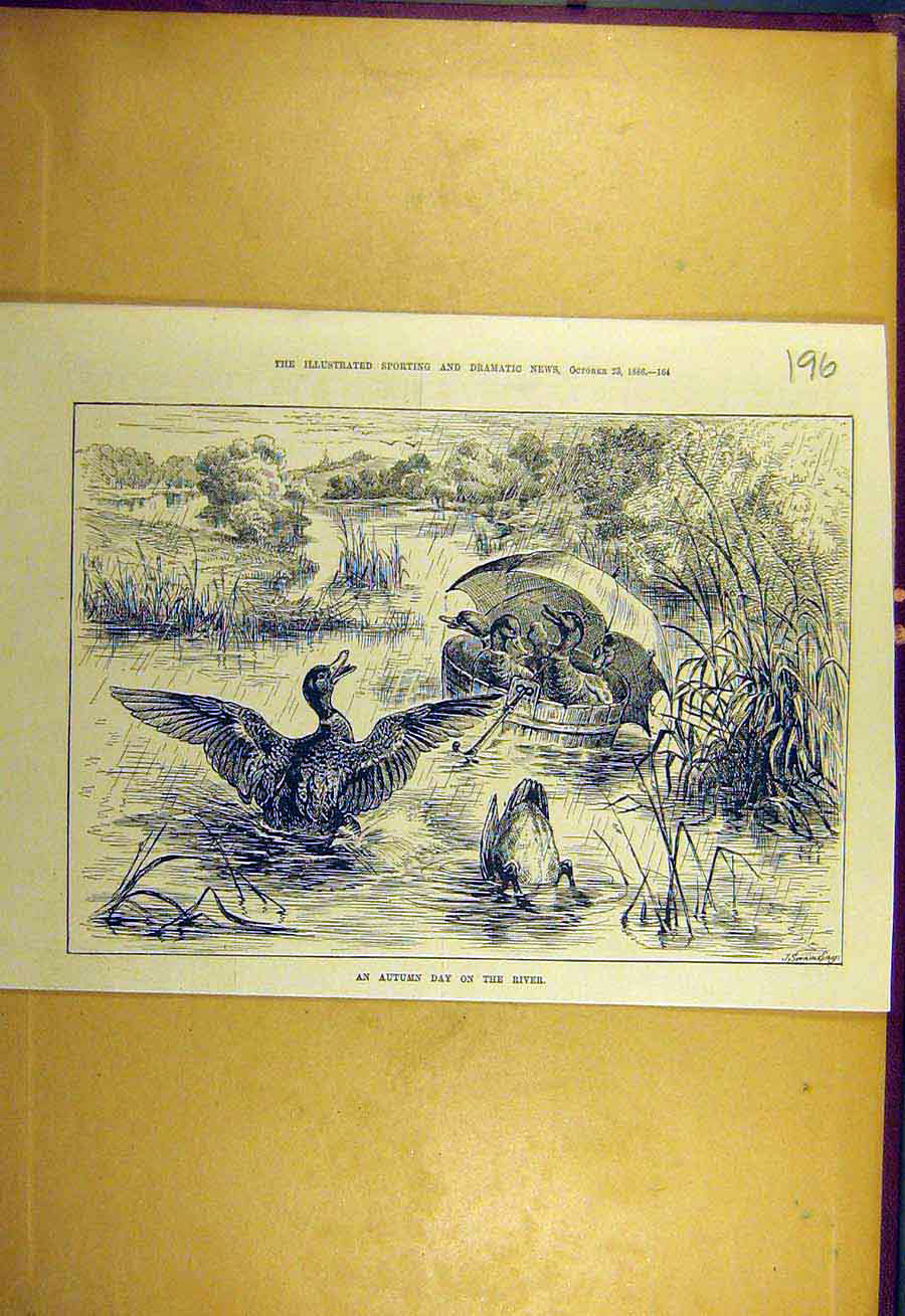 Print 1886 Autumn Day River Ducks Wooden-Tub Rain Birds 968731 Old Original