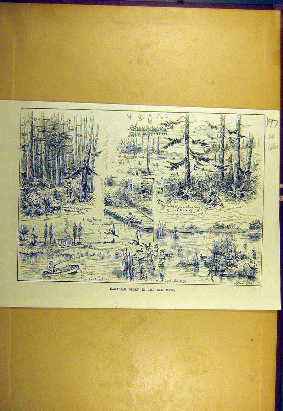 Print 1886 Canadain Sport Wild-Pigeon Shooting Partridge Fish 978731 Old Original