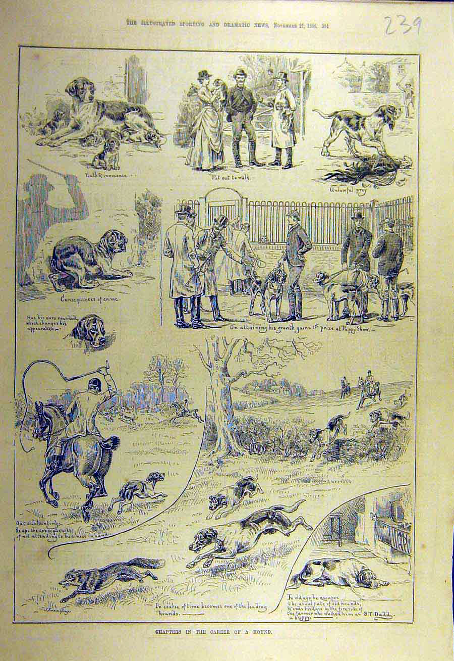 Print 1886 Hound Sketches Hunting Dadd Dogs 398731 Old Original