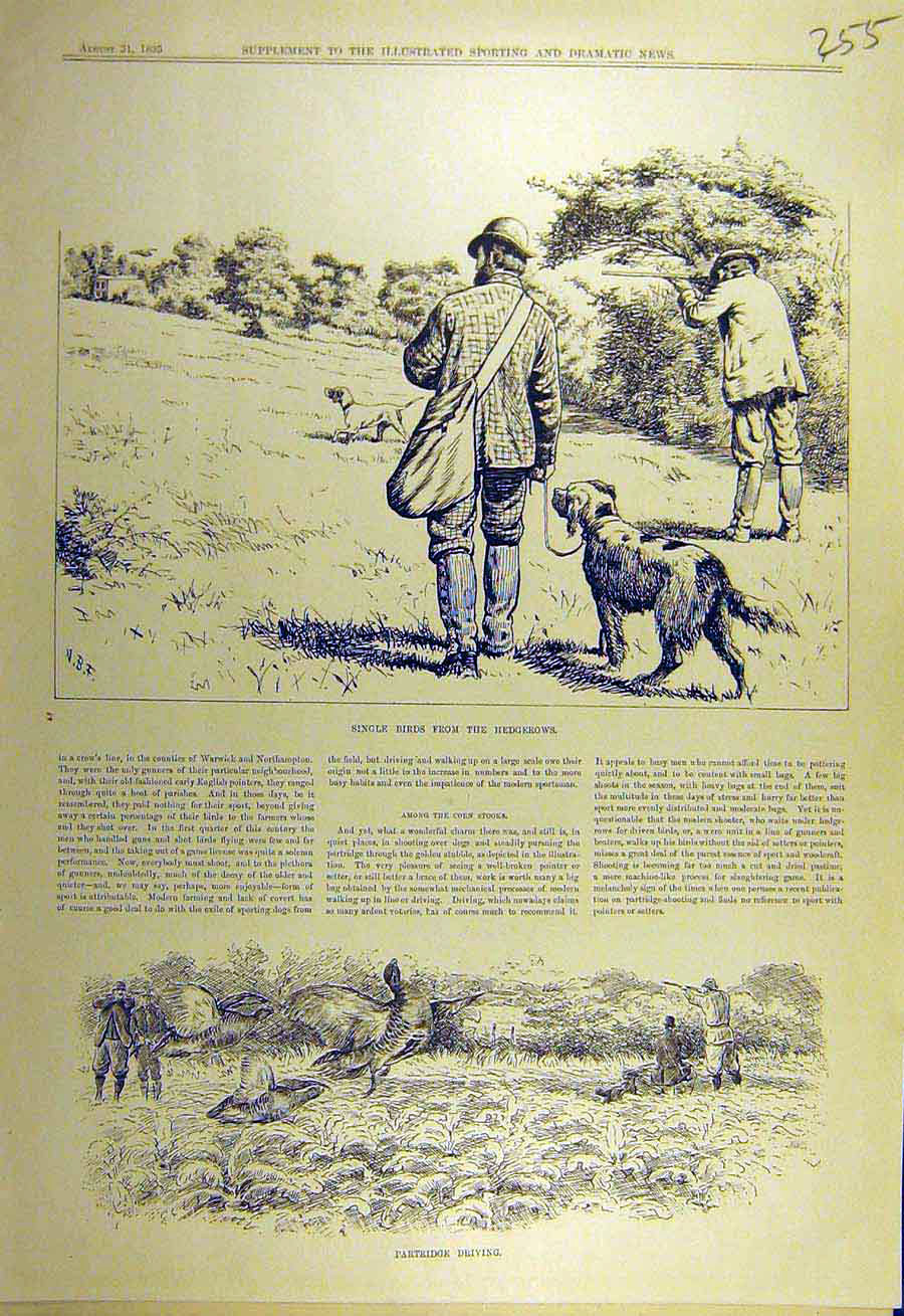 Print 1895 Hedgrow Shooting Birds Partridge Driving 558731 Old Original