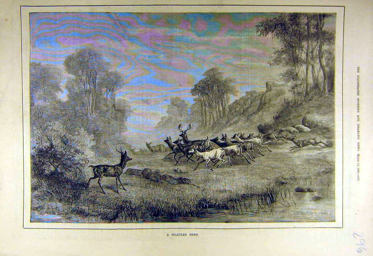 Print 1880 Startled Herd Deer Forest Animal 968731 Old Original