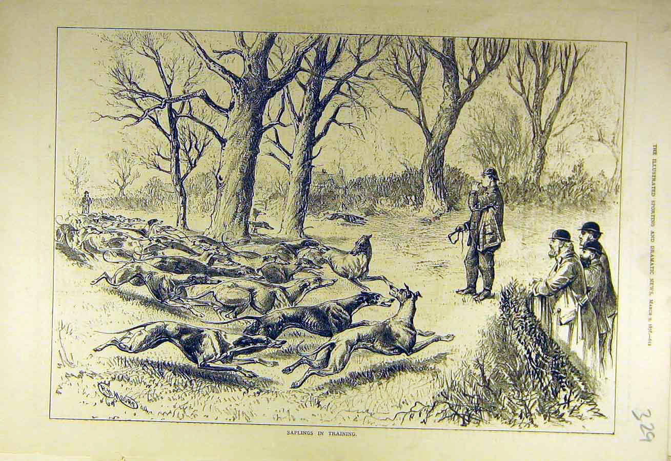 Print 1878 Saplings Training Hounds Hunt Hunting Sport 298731 Old Original