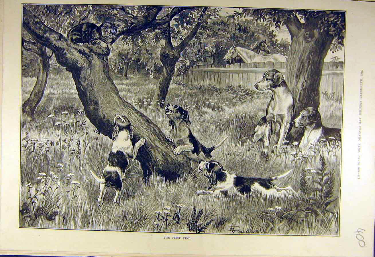 Print 1889 First-Find Cat Puppies Hounds Field Hunting 008731 Old Original