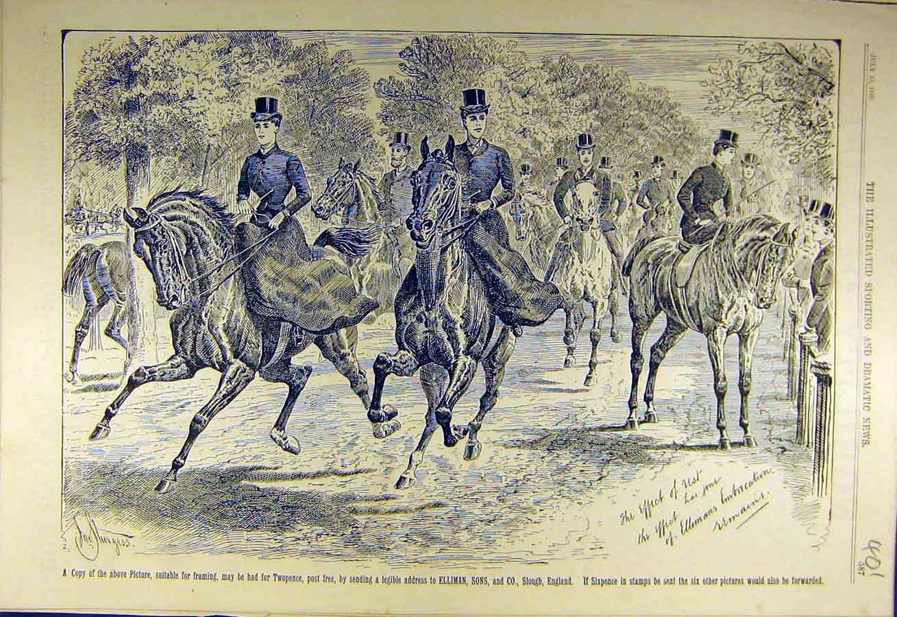 Print 1889 Ellimans Embrocation Advert Riders Horses 018731 Old Original