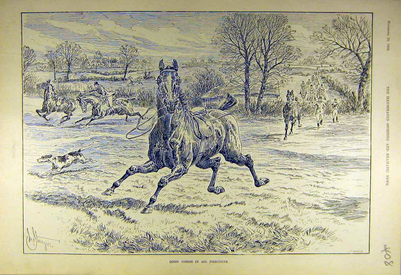 Print 1892 Loose-Horses Hunters Hounds Riders Hunting 088731 Old Original