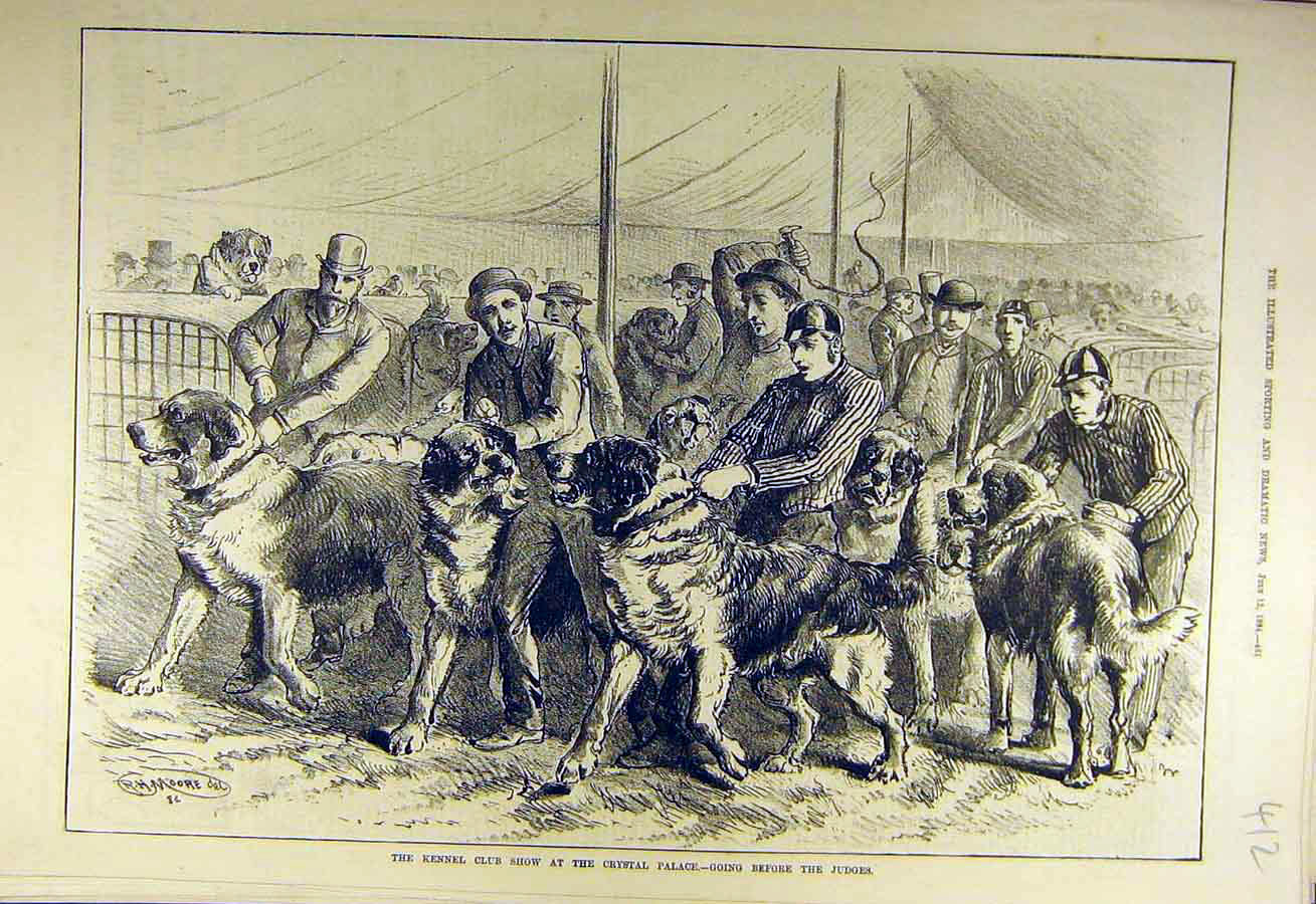 Print 1884 Kennel Club Show Crystal Palace Hounds Dogs 128731 Old Original