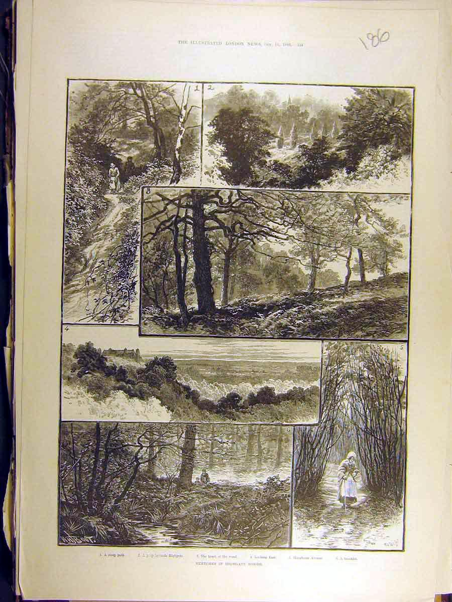 Print 1884 Highgate Woods Sketches Path Hornbeam Brook 868771 Old Original