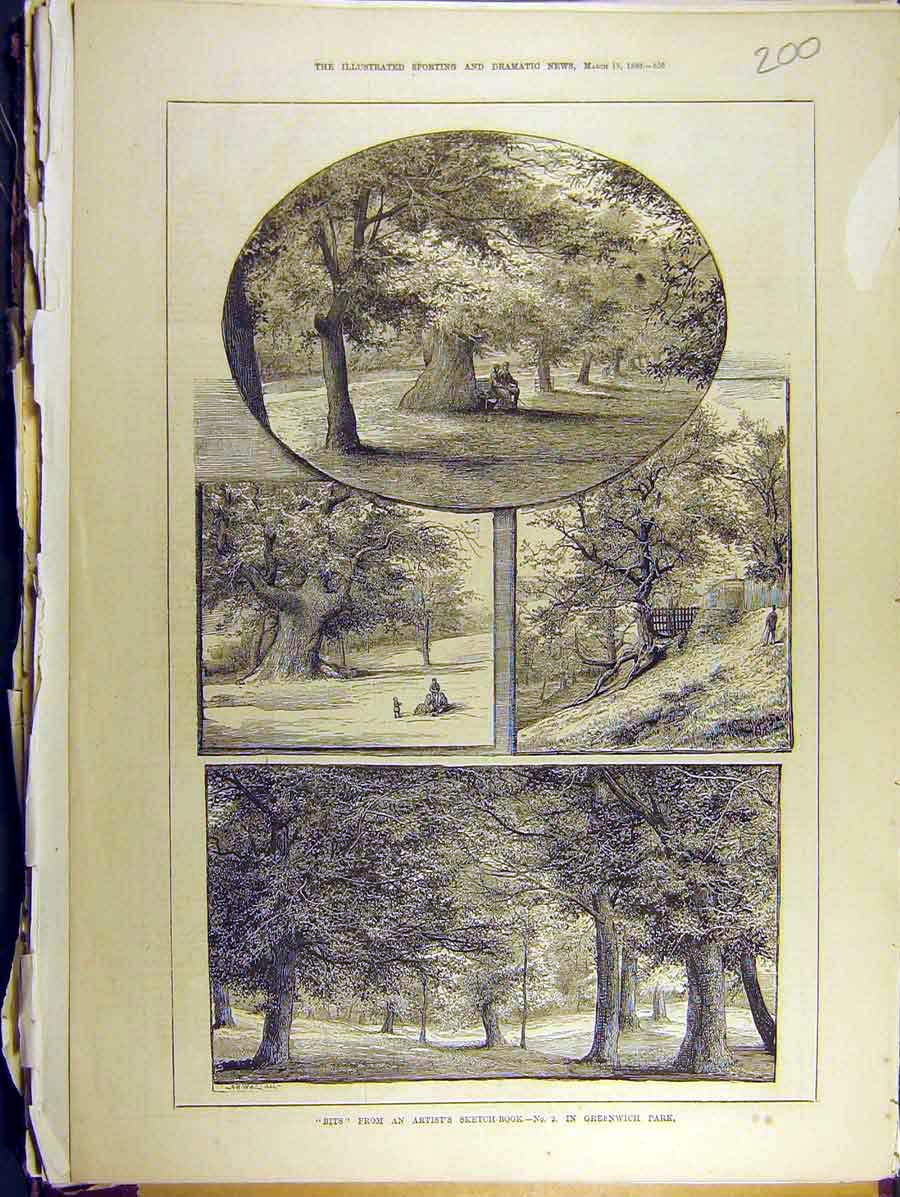 Print 1880 Greenwich Park Artist Sketches Trees Oak 008771 Old Original