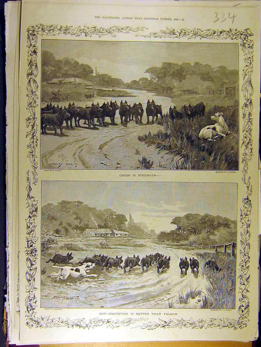 Print 1885 Pigs Dog Berkley Sketch Chase Farm Country 348771 Old Original