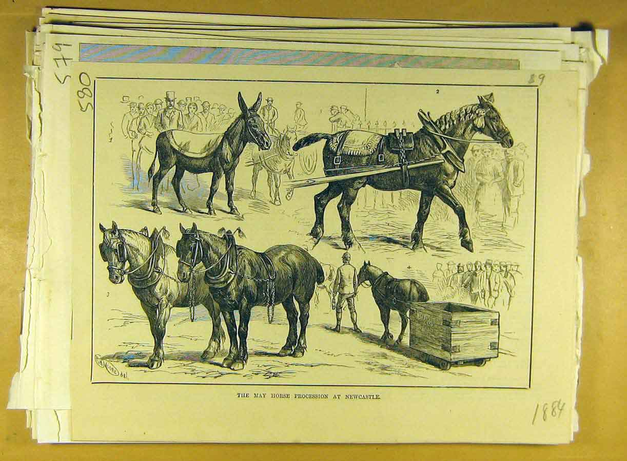 Print 1884 May Horse Procession Newcastle Animal 808791 Old Original