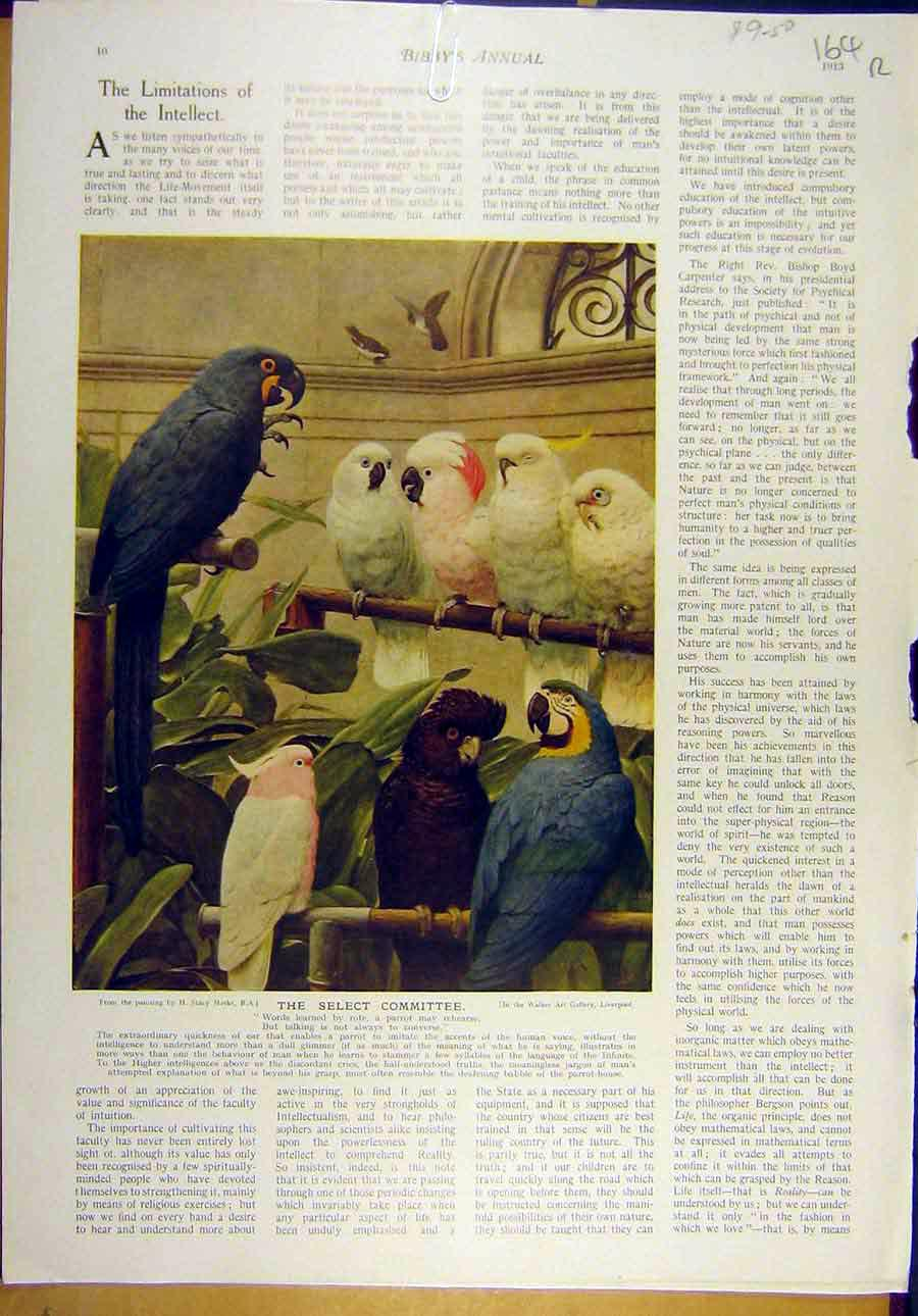 [Print 1913 Marks Committee Parrots Bird Gunning-King Father 64R8821 Old Original]