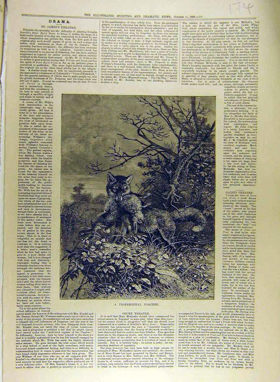 Print 1880 Professional Poacher Fox Rabbit Country 748841 Old Original