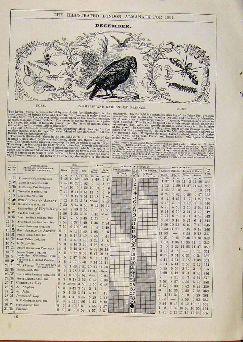 Print Farmers Bird Butterfly 1891 December Events Diary 248901 Old Original