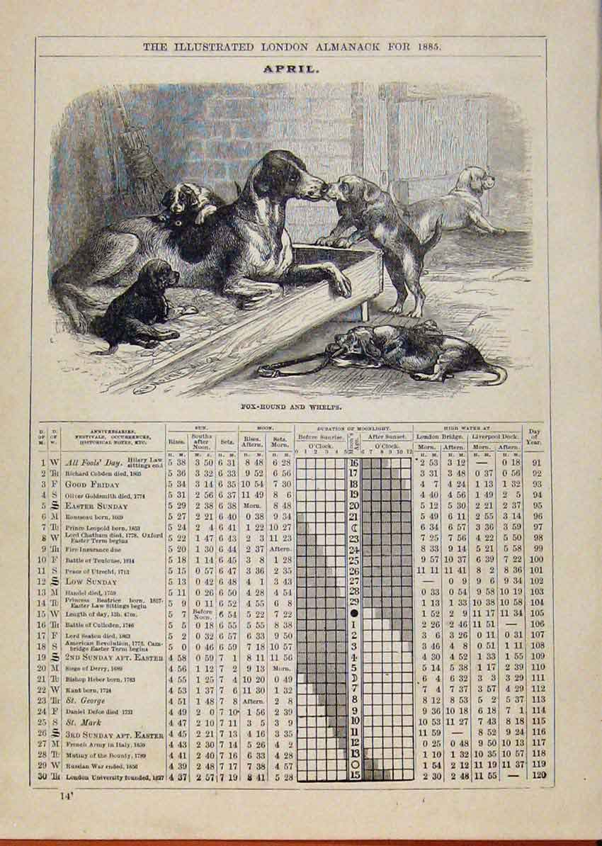 Print London Almanack April 1885 Fox Hound Whelps Sketch 118901 Old Original