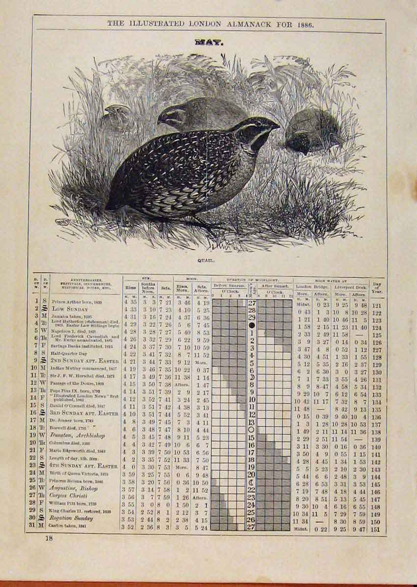 Print London Almanack April 1886 Golden Plover 248901 Old Original