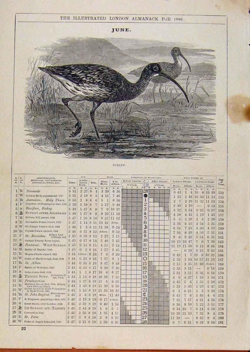 Print London Almanack June 1886 Curlew Bird 258901 Old Original