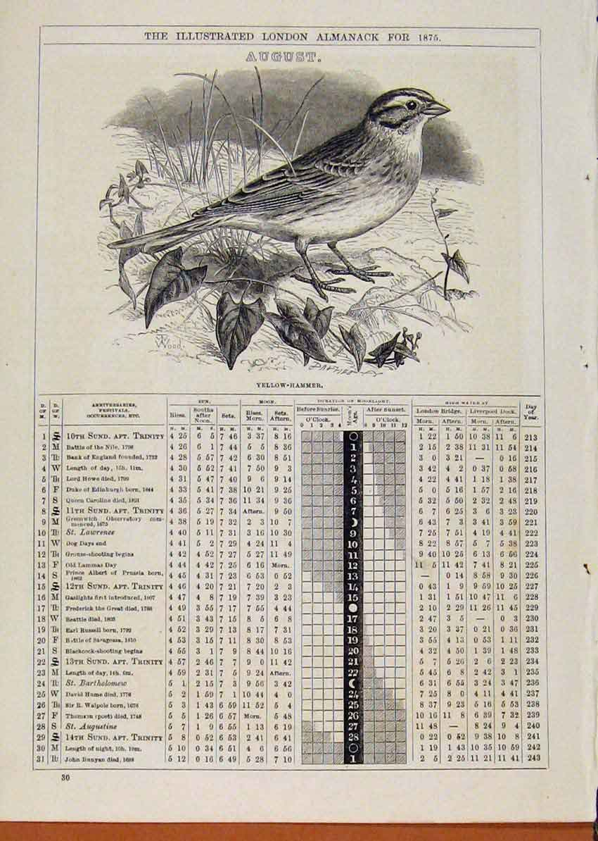 Print Yellow-Hammer Bird 1875 August Events Diary 838901 Old Original