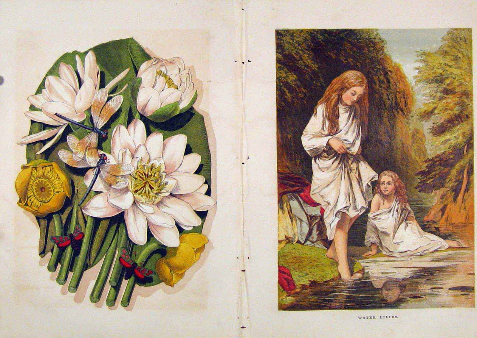 Print Illustrated London Almanack Water Lilies Color 088921 Old Original