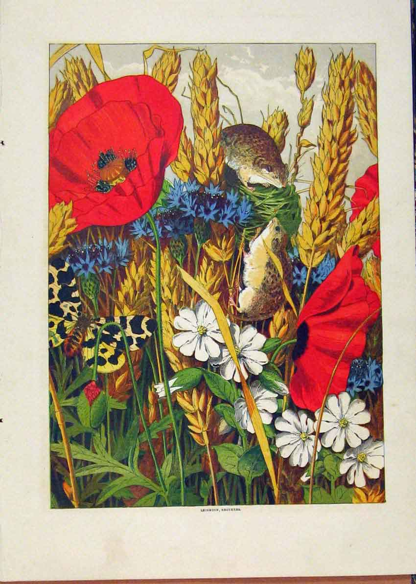 Print Illustrated London Almanack Mice In Flowers Color 648921 Old Original