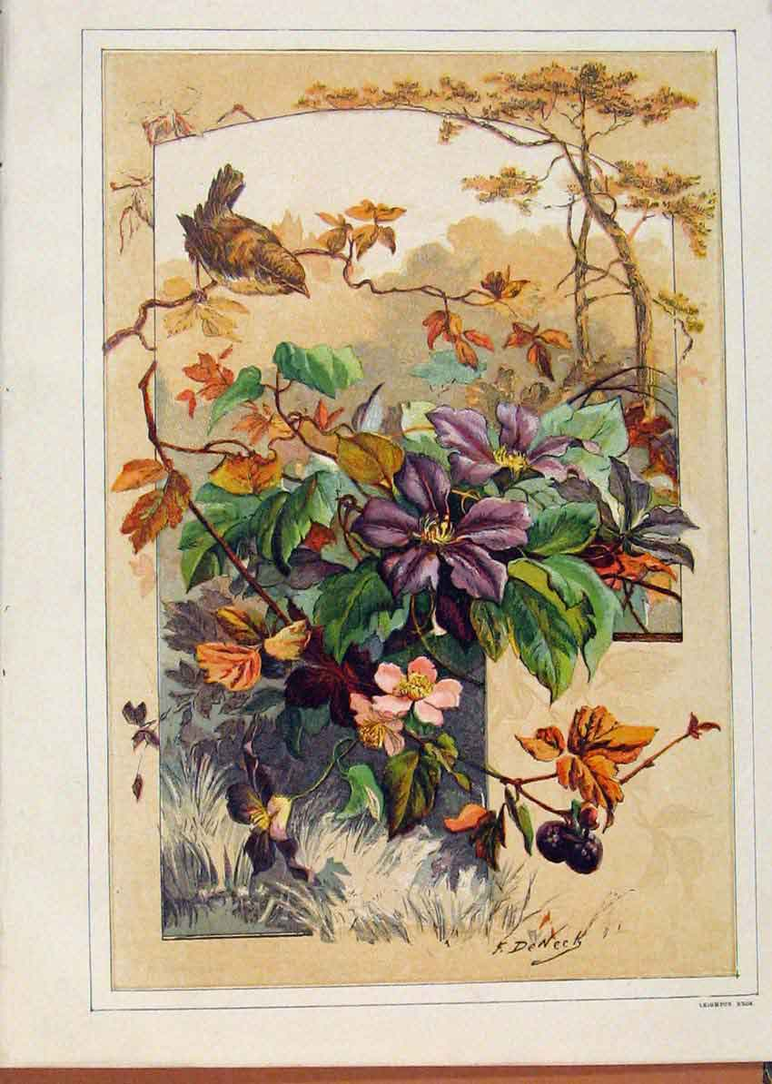 Print Illustrated London Almanack Rare Color Birds And Flower 708921 Old Original