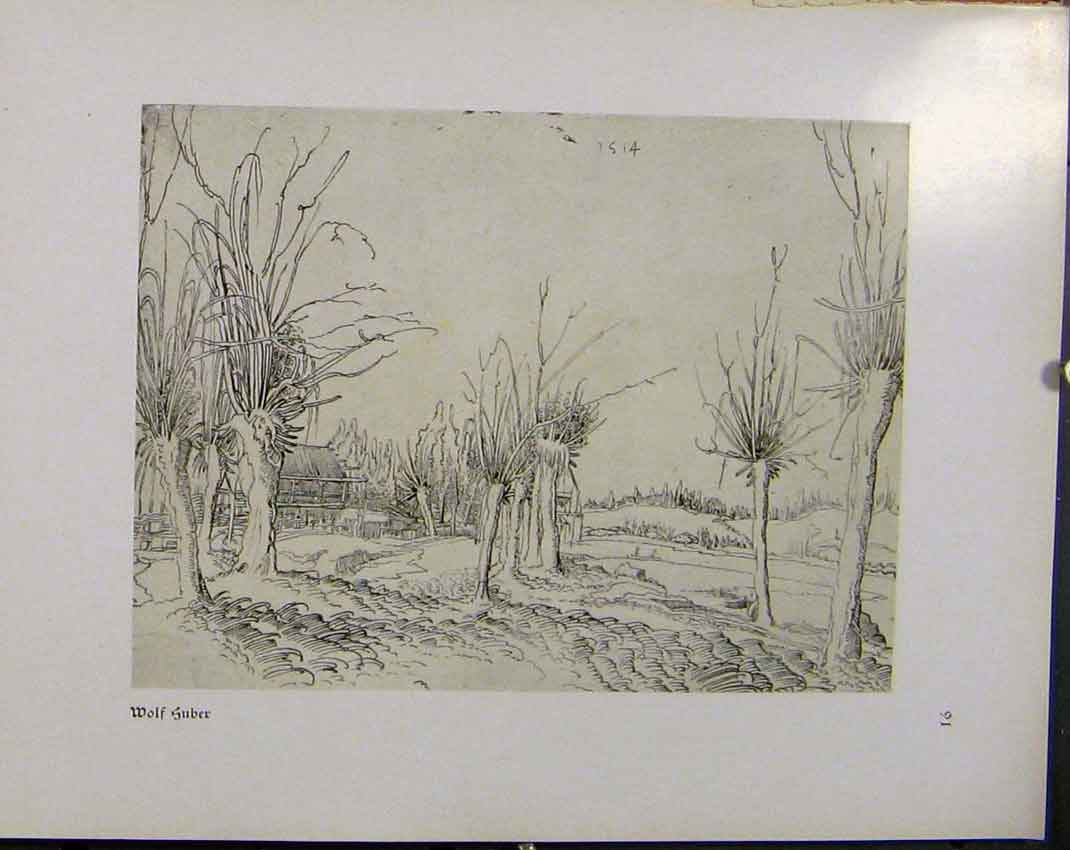 Print German Drawings Wolf Suber Trees And Landscape C1923 358941 Old Original