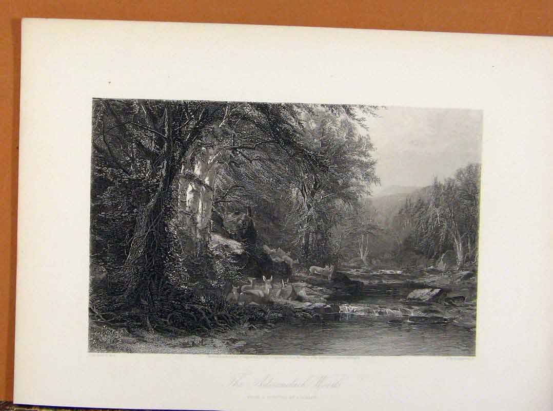 Print Picturesque America Adirondack Woods Steel Engraving 178961 Old Original