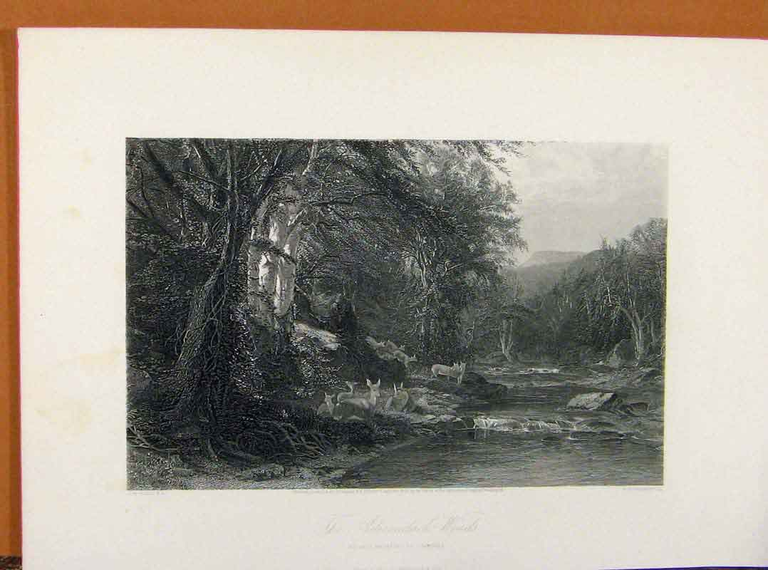 Print Picturesque America Adirondack Woodds Steel Engraving 188961 Old Original