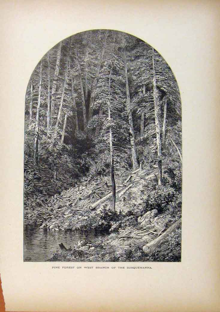 Print Picturesque America Pine Forest West Branch Susquehanna 738961 Old Original