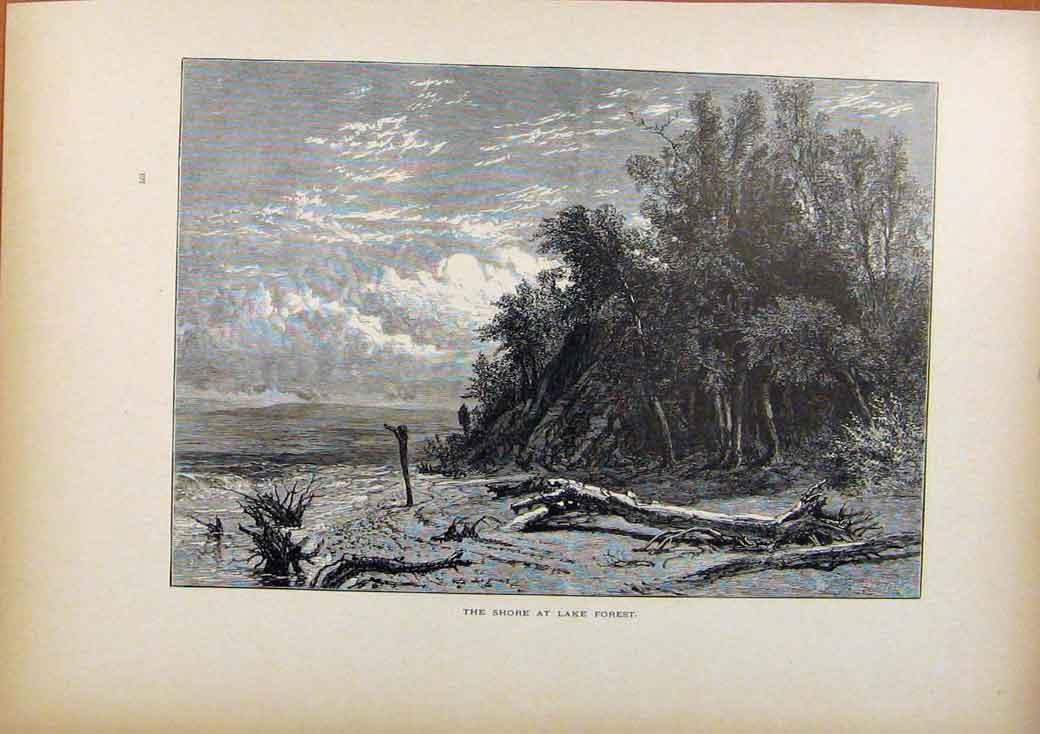 Print Picturesque America Shore At Lake Forest C1883 118961 Old Original