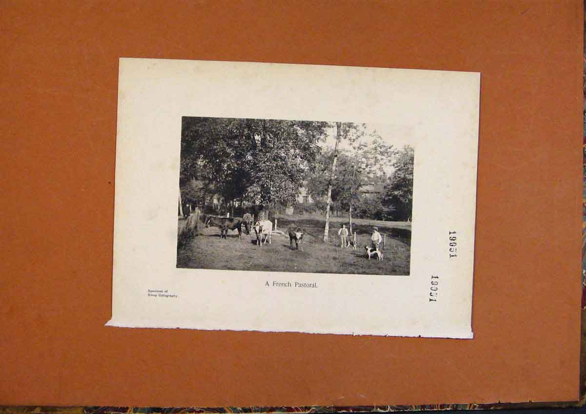 Print C1880 French Pastoral Cattle Farm Art 548991 Old Original