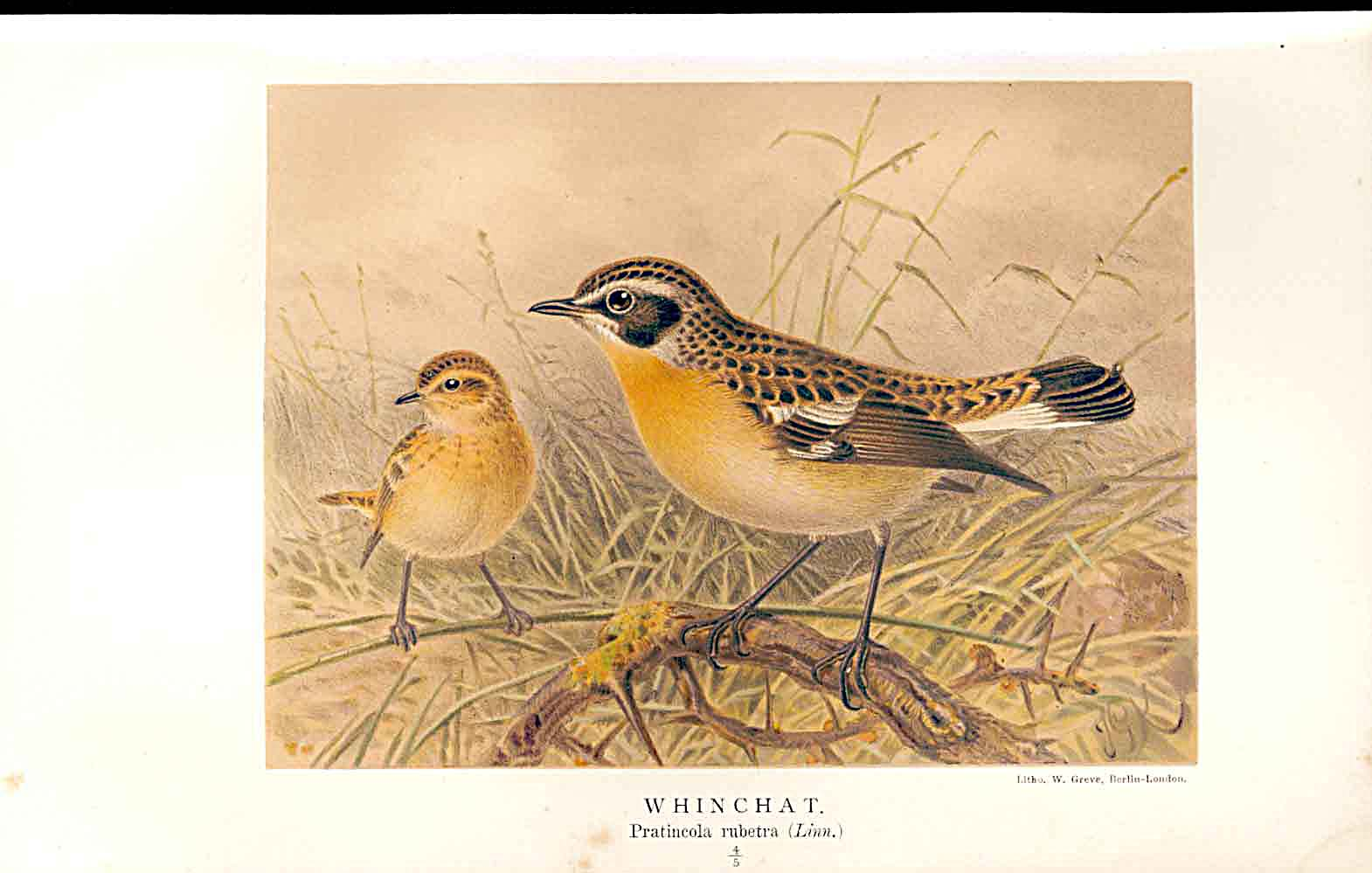 Print Whinchat Lilford Birds 1885-97 By J G Keulemans 109011 Old Original