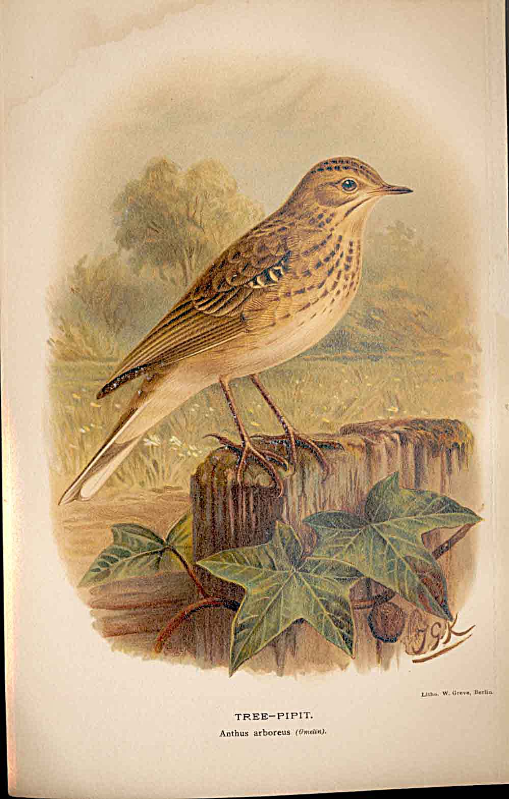 Print Tree Pipit Lilford Birds 1885-97 By J G Keulemans 609011 Old Original
