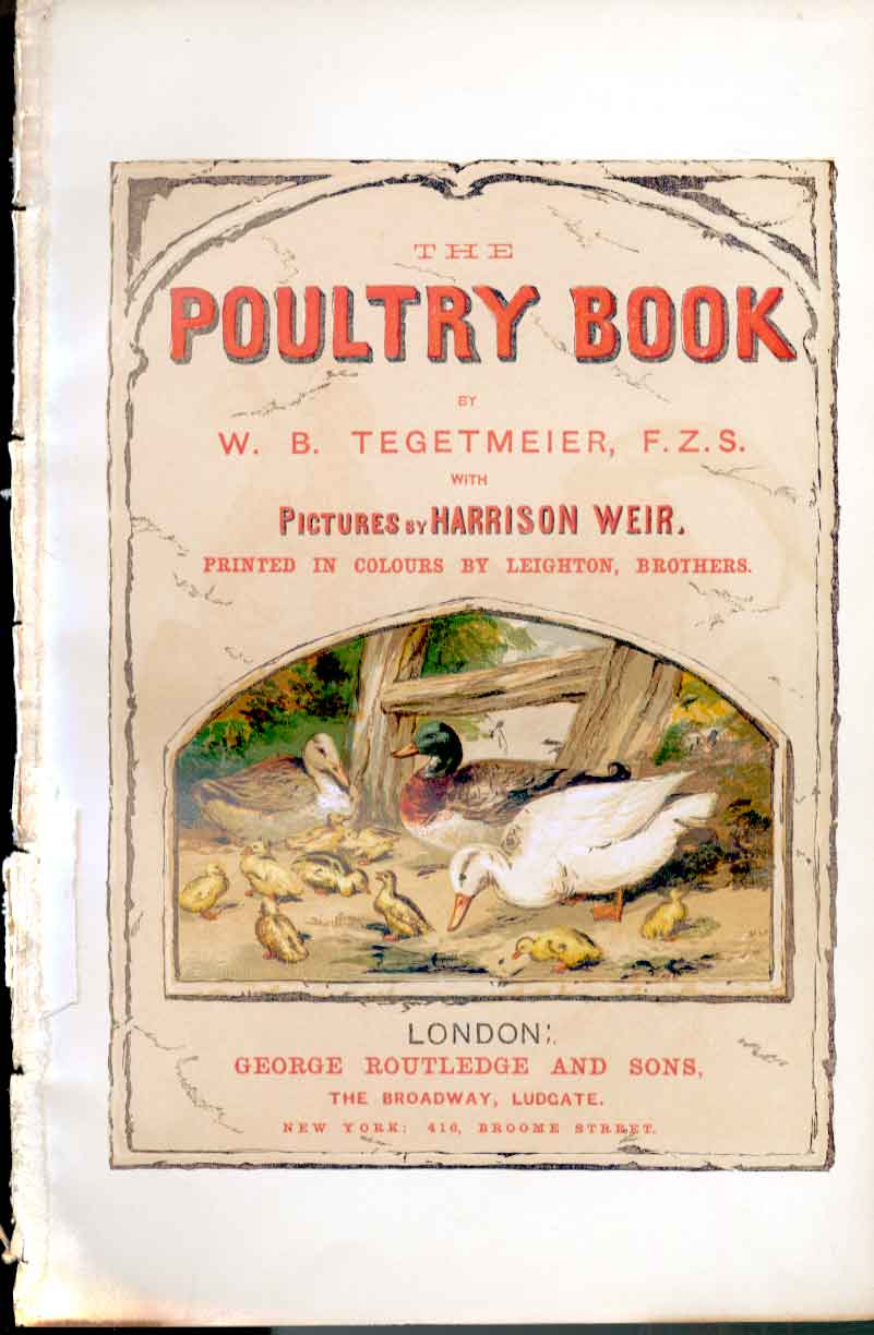 Print Poultry Decorative Poultry Weir 1867 Bird 469141 Old Original