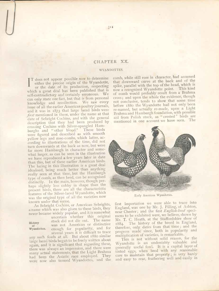 Print 7 Engravings Poultry Ludlow 1902 Birds 01A9151 Old Original