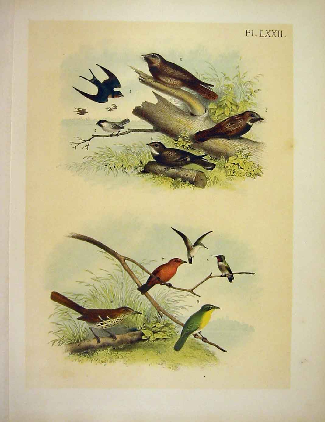 Print Carolina Titmouse 8 Jasper Birds America 1878 729201 Old Original