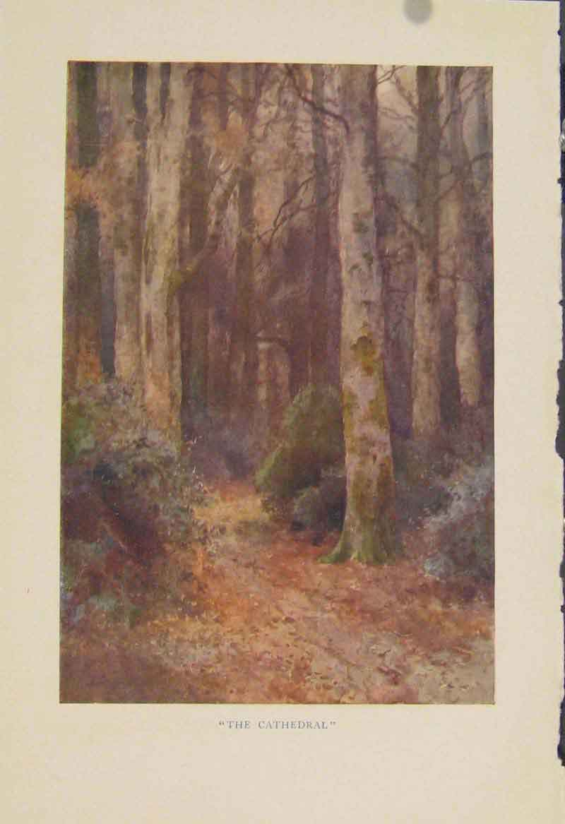 Print Painting By Haslehust The Cathedral Forrest Trees 669331 Old Original