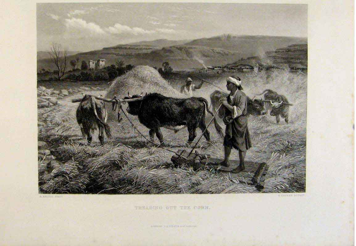 Print The Holy Bible Treading Out The Corn Steel Engraving 409371 Old Original
